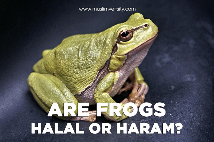 Are Frogs Halal or Haram?