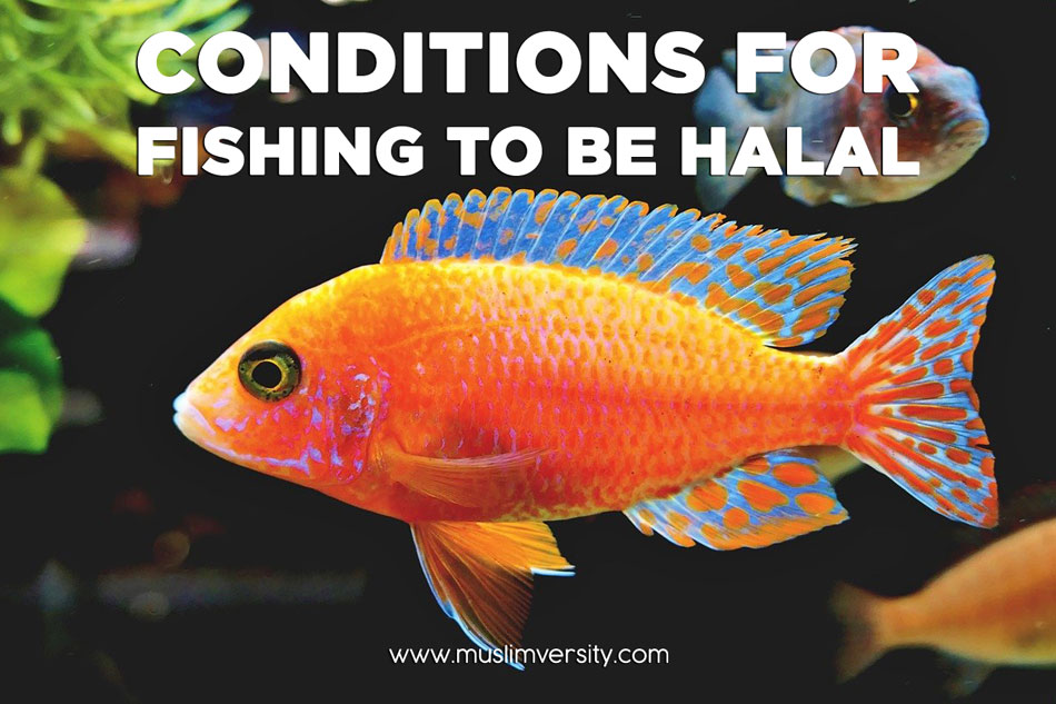 Conditions for Fishing to be Halal