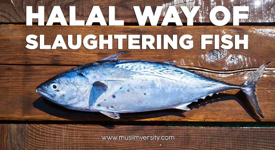 What is the Halal way of Fishing and Slaughtering Fish?