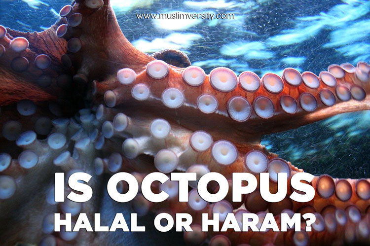 Is Squid and Octopus Halal or Haram?