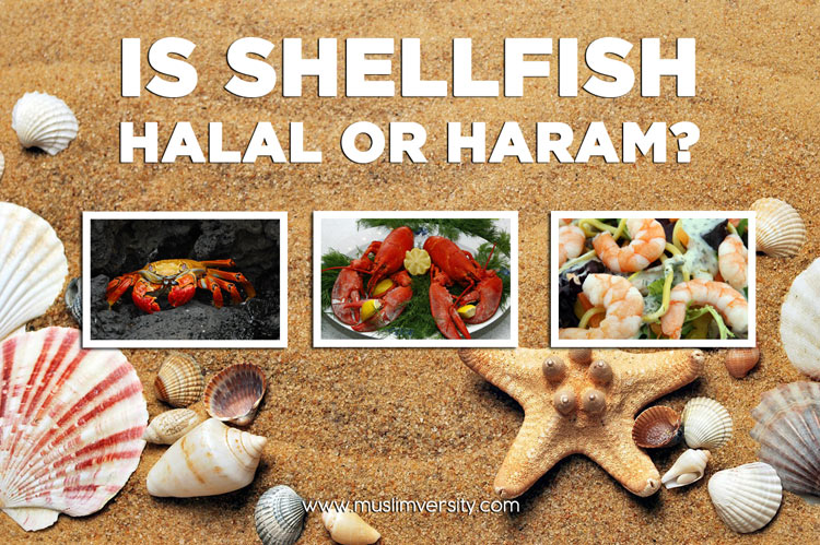 Is Shellfish Halal or Haram? (Prawns, Crabs, Shrimps, Lobsters, Oysters)