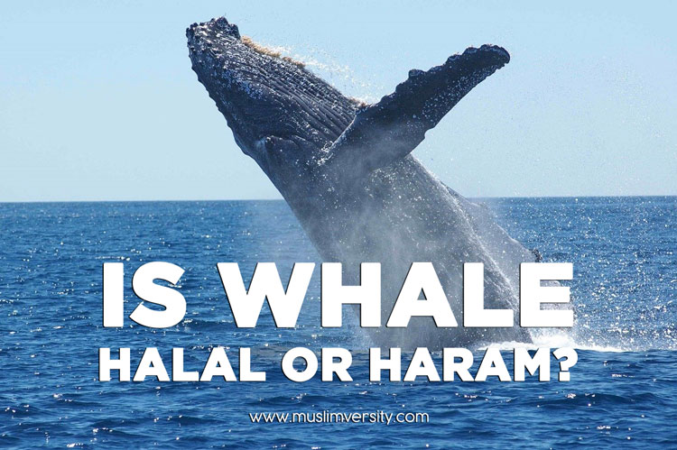 Is Whale Halal or Haram?