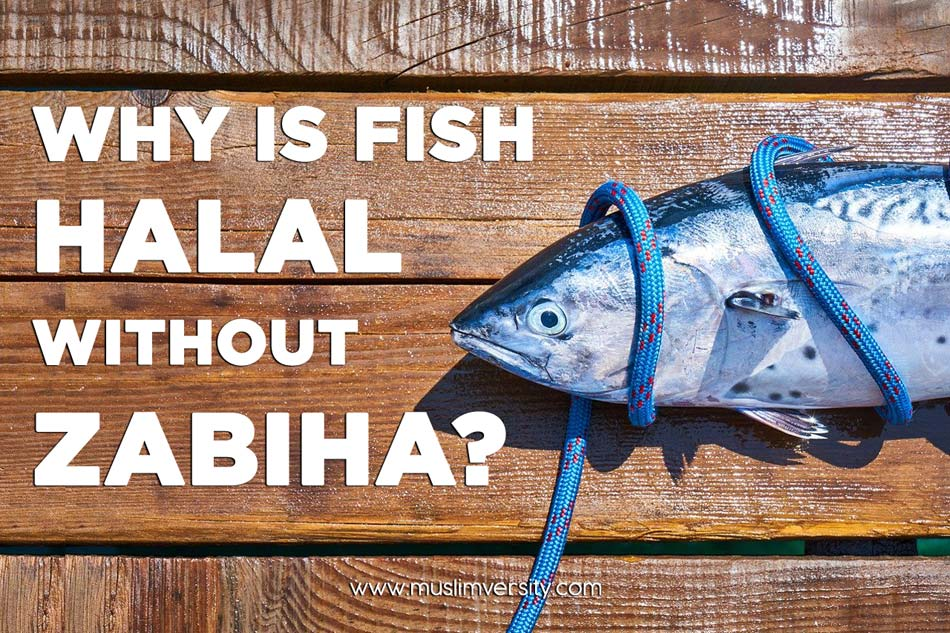 Why is Fish Halal in Islam without Zabiha Slaughter?